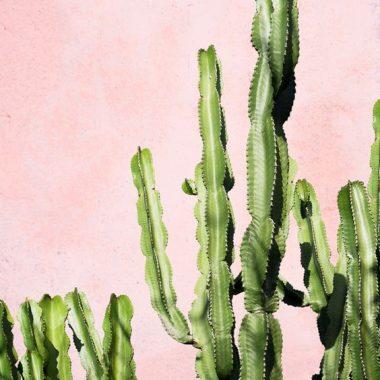 inspiracija kaktus dekoracija enterijer